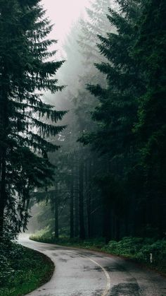 The road in the forest wallpaper November 2019 forest green asphalt road forest road rain autumn november wallpaper Dark Green Aesthetic, Nature Aesthetic, Wallpaper Aesthetic, Aesthetic Backgrounds, Beautiful Nature Wallpaper, Beautiful Landscapes, Beautiful Wall, Beautiful Places, Forest Photography