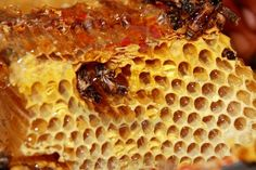 Sweet fresh honey and honeybees