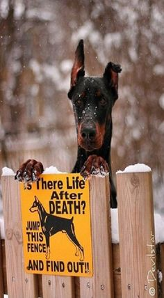 Hehe,  Love both the dog and the saying although the dog looks very friendly so I'd jump the fence!