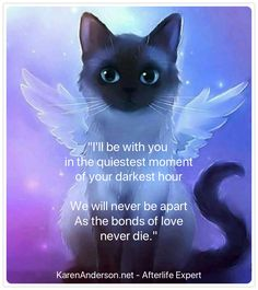 The Amazing Afterlife of Animals: Messages and Signs From Our Pets On The Other Side I Love Cats, Crazy Cats, Cute Cats, Cat Quotes, Animal Quotes, Pet Poems, Animals And Pets, Cute Animals, Pet Loss Grief