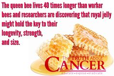 """Great Stuff!! """"The queen bee lives 40 times longer than worker bees and researchers are discovering that royal jelly might hold the key to their longevity, strength, and size.""""Please re-pin to share with your family & friends! Together we'll empower the world with life-saving knowledge! Join us for much more great information on The Truth About Cancer <3"""
