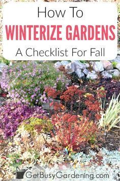 Learn everything you need to know about winterizing gardens in the fall. Includes a list of things you can do to prep garden beds before the snow flies. Plus, lots of ideas and detailed steps to winterize flowers and vegetables, indoor and outdoor plants in pots and containers, as well as tips for getting your yard and garden furniture ready for winter too. #coldclimate #winterizegarden #gardening #garden