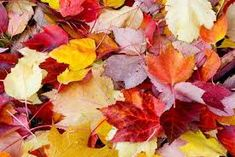 Image result for photos of leaves