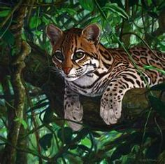 Many ocelots live under the leafy canopies of South American rain forests, but they also inhabit brushlands and can be found as far north as Texas. These cats can adapt to human habitats and are sometimes found in the vicinity of villages or other settlements.
