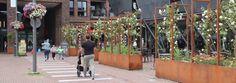 Het college van B & W kan voor de vestiging van een sociaal-cultureel centrum in Pijnacker verder met het uitwerken van de locaties van Buurt & Zo en het Oranjepark, uitgaande van een gebouw met een vloeroppervlak van 2500 vierkante meter en een multifunctionele zaal voor 200 stoelen. Maar de gemeenteraad droeg het college donderdagavond ook op om binnen het bestemmingsplan Centrum (winkelcentrum Ackershof en direct Plants, Plant, Planets