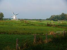 witte molen, natuur terrein.
