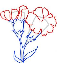 carnations drawing - Google Search