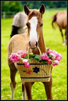 Foal and flower basket