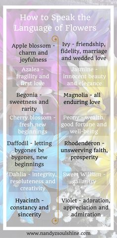 learn what different types of flowers symbolize to send the perfect bouquet or gift the perfect blossom Flower Tattoo Meanings, Tattoo Flowers, Flower Symbol, Different Types Of Flowers, Beauty First, Language Of Flowers, Tattoos With Meaning, Calla Lily, Amazing Flowers