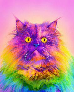 Best Ramzy Masri Turns World Rainbow images on Designspiration Cute Funny Animals, Cute Baby Animals, Cute Dogs, Rainbow Images, Rainbow Art, Beautiful Cats, Animals Beautiful, Colorful Animals, Cat Photography