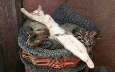 one bad cat1