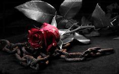 ROSE - CHAINS, GOTHIC, RED, ROSE