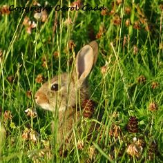 Baby rabbit photography print, nature, rabbit, baby rabbit, Wiltshire, countryside, art, British, collectibles, home by ByGaddArtandDesign on Etsy