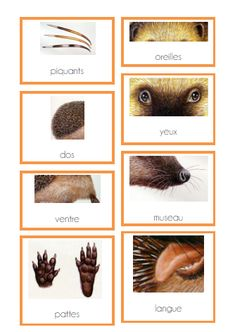 Science and nature 863354191050411492 Montessori Materials, Montessori Activities, Kindergarten Activities, Science Experiments Kids, Science Activities, Activities For Kids, Wallpapers Whatsapp, Wallpaper Fofos, Hedgehog Craft
