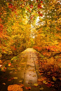 Warm Autumn Path, Yuzawa, Akita, Japan - photo: Jason Arney