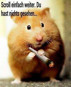 Bitte schön unauffällig verhalten... Mehr lustige Bilder gibts auf FUNgesteuert.com