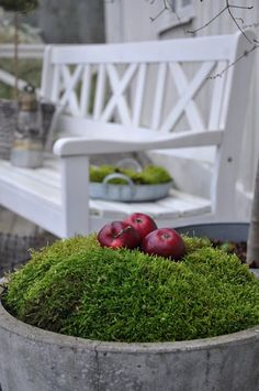 #FreshFestive - decorate with moss-LOVE the apples :)