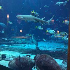 Ossiano, Dubaï - Restaurant Avis, Numéro de Téléphone & Photos - TripAdvisor Dubai Aquarium, Restaurants, Trip Advisor, Whale, Photos, Animals, Beautiful, Viajes, Whales