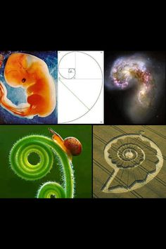 Fibonacci Sequence everywhere .. Inspiration for the formula balance in all our sunscreens. www.sunumbra.com