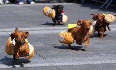 oh my gosh, i lovee winnie dogs especially mine