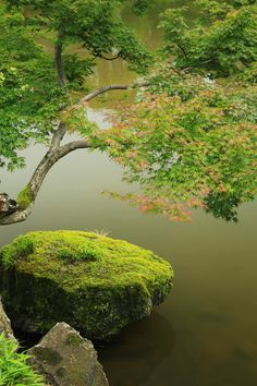 Foto de Genkyu-Rakuraku-en garden - Google Fotos