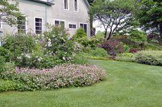The garden emerges » North Country Reflections geranium-macrorrhizum