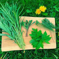 Lue vinkkejä alkukesän villiyrttien käyttöön. Herbs, Herb, Medicinal Plants