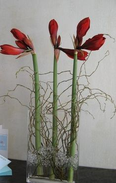 cheerful amarillis in vase with curly willow - crafts - # . - cheerful amarillis in vase with curly willow – crafts – - Christmas Flowers, Christmas Time, Deco Floral, Floral Design, Flower Vases, Flower Pots, Plumbago, Flower Decorations, Christmas Decorations