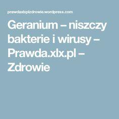 Geranium – niszczy bakterie i wirusy – Prawda.xlx.pl – Zdrowie