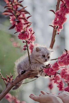 Kitten: such pretty flowers... Human: OMG the kitten's in the tree!