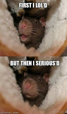 Adorable little rattie!! <3<3<3 ^_^