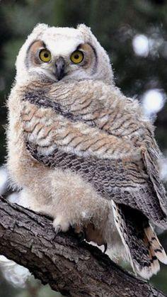 Beautiful owl..