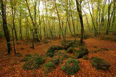Espectaculares bosques y parques donde perderse este otoño.