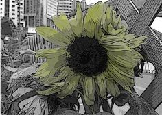Sad Sunflower is a signed Fine Art Photograph by Joy Neasley. The day I visited the Botanical Garden show in Hong Kong, rain threatened to