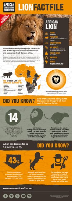 Learn facts about the African lion - one of Africa's most beloved species.