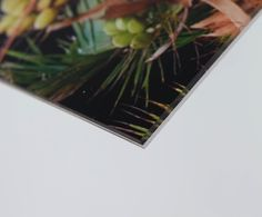 Clear Cast UV Perspex (VA Grade)...    Offers a 98% UV filter in addition to the Diasec protection already supplied. Used for pure museum grade applications where quoted percentage figures are a mandatory requirement.    The filter is built into the material itself so there is no coating or coloured sheen on the surface.