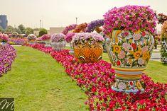 dubai miracle garden photos - Google Search