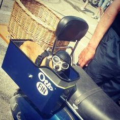 Otto is ready for riding #vespa #mantova #VWD2014 #vespadogs