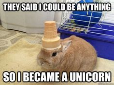 Look at This Adorable Rabbit With Random Items on its Head - World's largest collection of cat memes and other animals Cute Baby Bunnies, Funny Bunnies, Cute Babies, Cute Little Animals, Cute Funny Animals, Humorous Animals, Unicorn Memes, Funny Unicorn, Animal Pictures