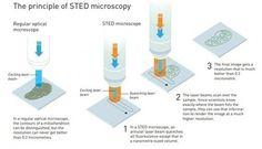 Microscopia' in Artículos CIENCIA-TECNOLOGIA   Scoop.it