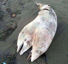 Upon closer inspection, the animal was discovered to be a two-headed dolphin.