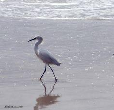 Garça na Praia