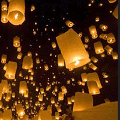 Google Image Result for http://www.shrubs.co.uk/ekmps/shops/shrubscouk/images/-firefly-chinese-lanterns-10-pack--15068-p.gif