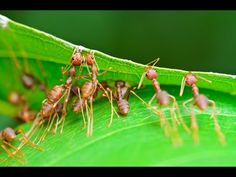 Karınca Türleri [Ant Species of the World]