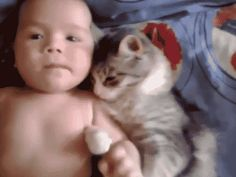 Cat loves Baby AWW - YouTube