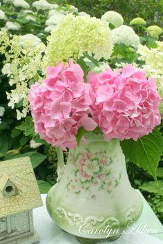 Pink & white Hydragna's *
