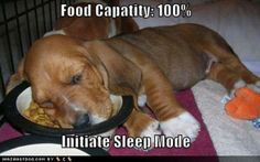 Funny Dog Pics With Words   dog with words funny alseep