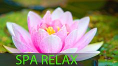 ★ Princessly Pink ★ 6 Hour Spa Music Long Time: Calming Music, Massage Music, Background Mus...