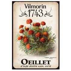 Vilmorin 1743 carotte graines de fleurs et legumes for Vilmorin graines