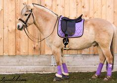 ( Eigen , Nikki ) Dreamer - Pony - Merrie - Gevorderde ruiter - Spelletjes , Buitenrit , Strandrit , Crossen , Springen , Dressuur